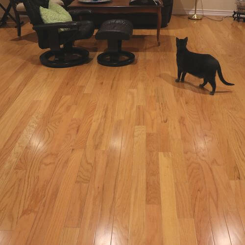 Hardwood Flooring Toronto Best Price On Hardwood Flooring In